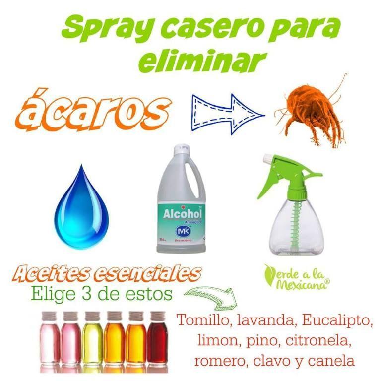 Spray Casero Para Acaros Verde A La Mexicana En 2020 Productos