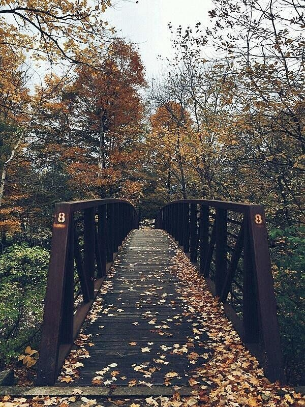 Autumn Bridge Art Print by Nikki Mason #fallseason