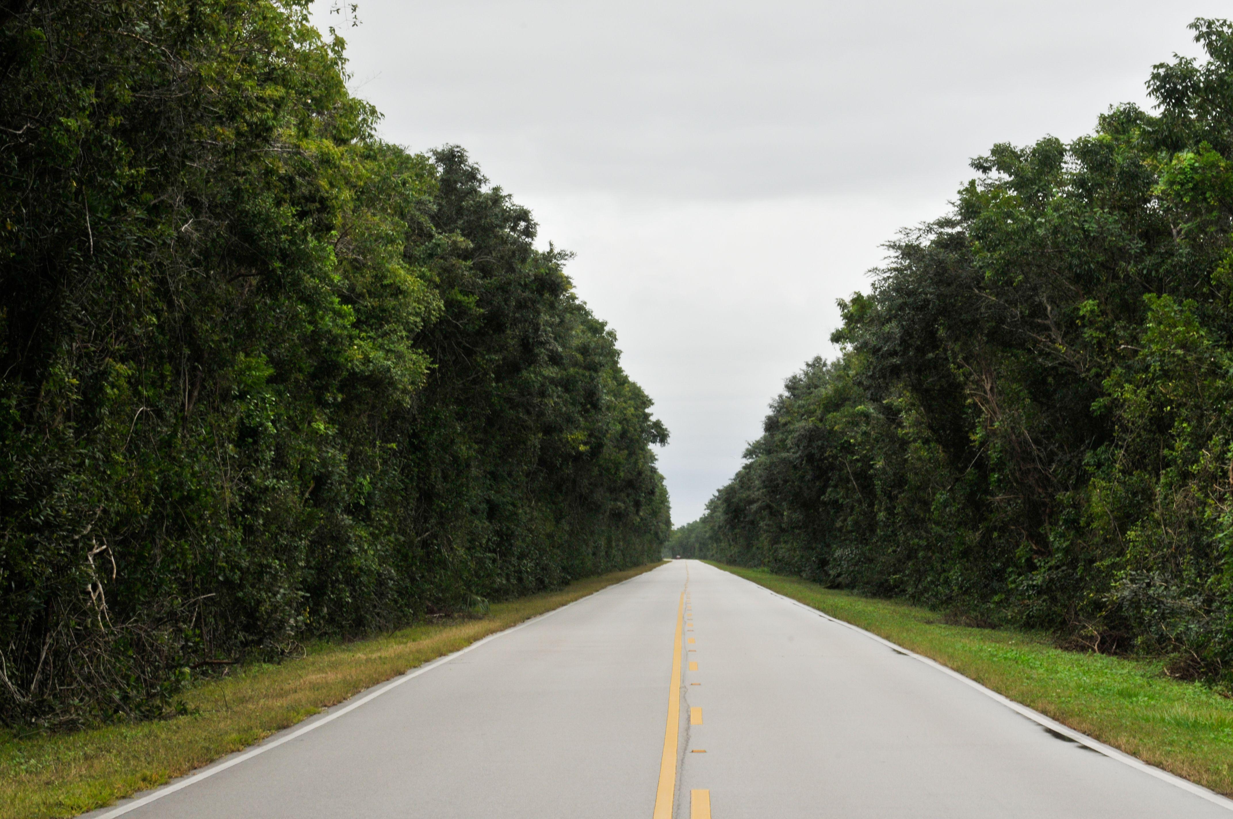 Travel Inspiration - The Everglades - Florida