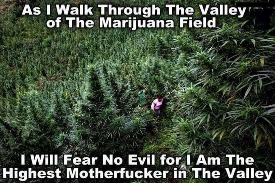 Pin on Sustainable Farming With Hemp/Legalize Marijuana