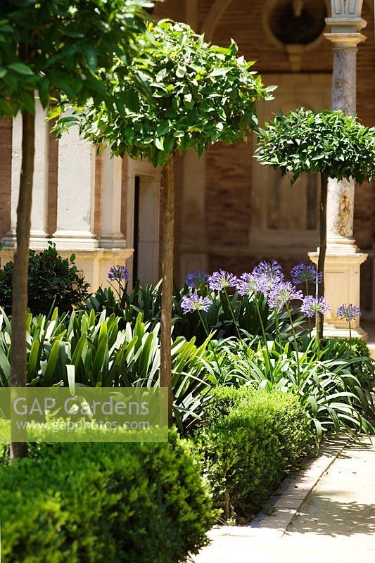 agapanthus in borders - Google Search