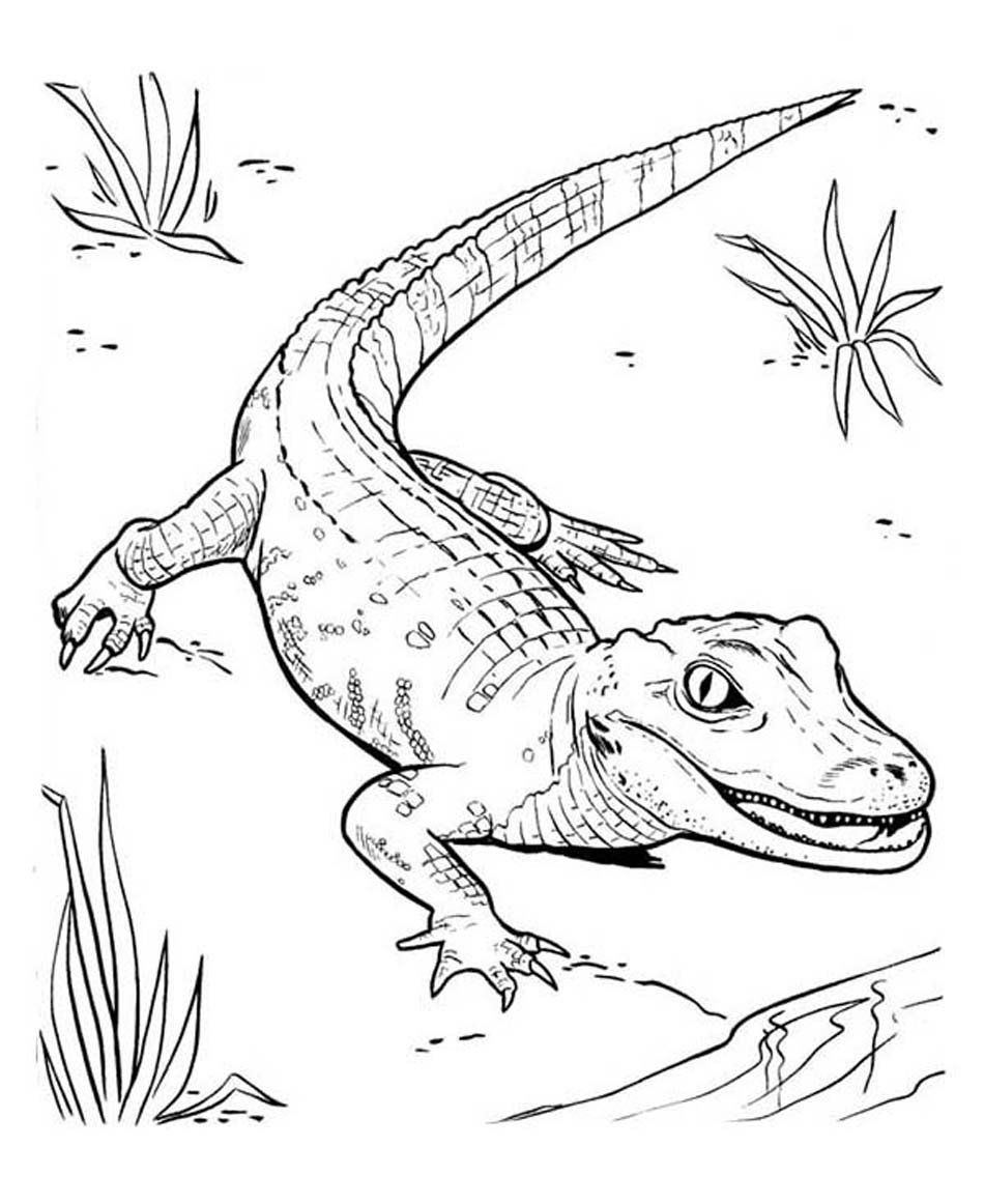 Cute Alligator Coloring Pages Alligator Coloring Pages Getcoloringpages In 2020 Zoo Coloring Pages Cute Coloring Pages Jesus Coloring Pages
