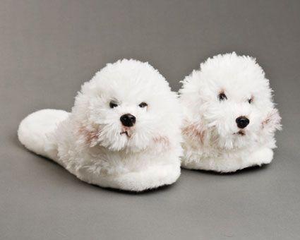 Bichon Frise Slippers Bichon Frise Cute Dogs Bulldog Breeds