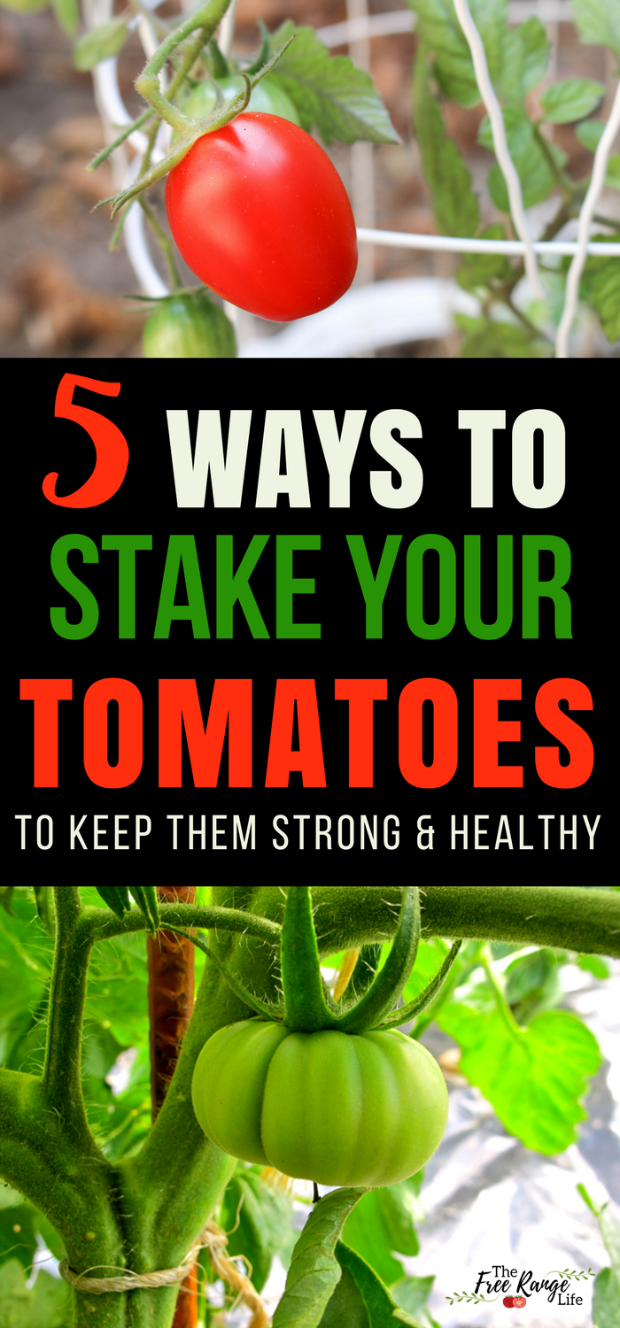 The 5 Best Ways To Stake Your Tomatoes Organic Gardening 400 x 300