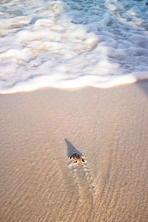 Bye little turtle!