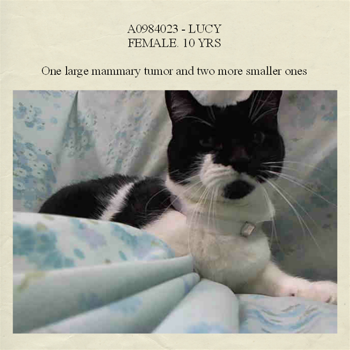 (1) NYC Urgent Cats - First Alerts: Injured and/or Ill in Need of...