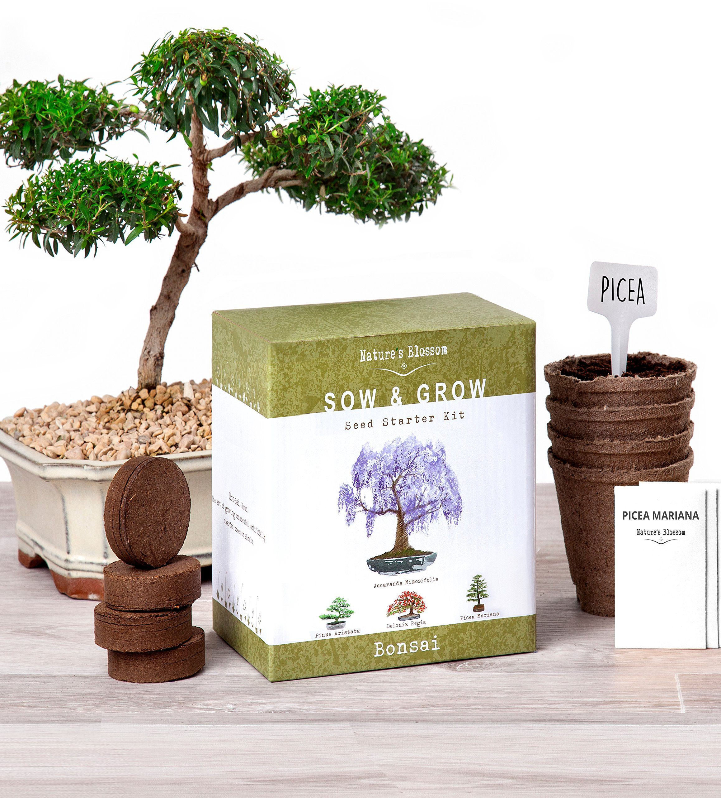 Amazon Com Nature S Blossom Bonsai Tree Seed Starter Kit Grow 4 Bonsais From Seeds Complete Bonzai Garden Seed Starter Kit Planting Pots Bonsai Tree Types