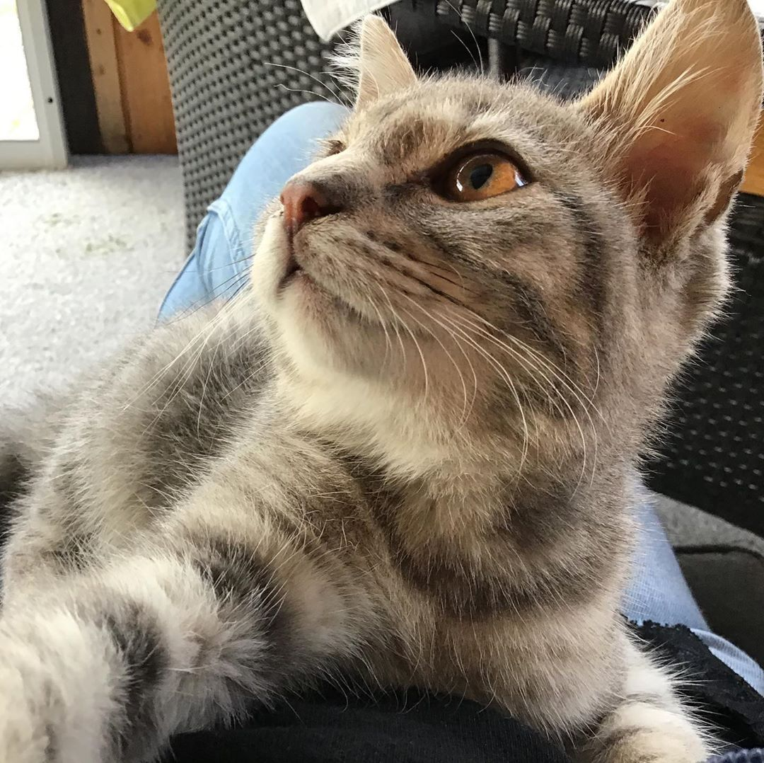 cute cats cute cats and kittens cute cats breeds