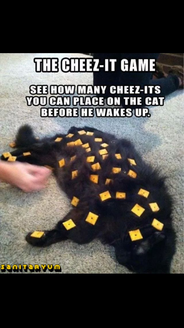 The cheezit game
