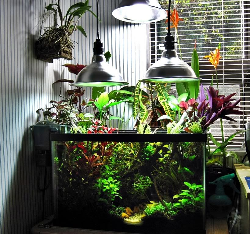... Fish Tank on Pinterest Fish tanks, Aquarium and Betta fish tank