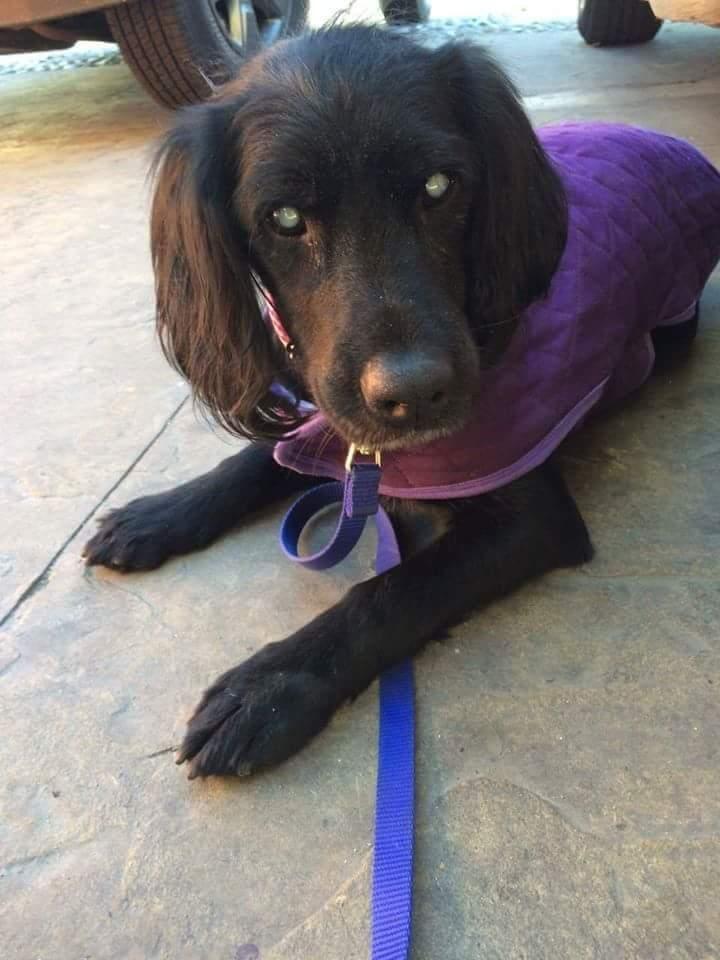 Adopt Victoria (BLIND) on Dog adoption, Animal rescue, Pets