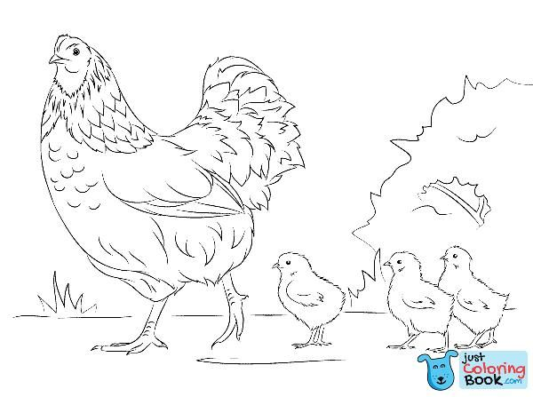 Hen And Cute Chicks Super Coloring Painting Ideas Hens Chicks With Hen And Cute Chicks Coloring Pa Bird Coloring Pages Coloring Pages Flamingo Coloring Page