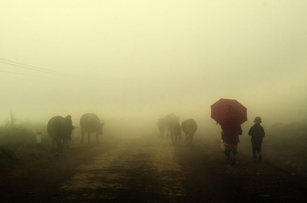 Photograph Trau by HAI TRINH XUAN on 500px