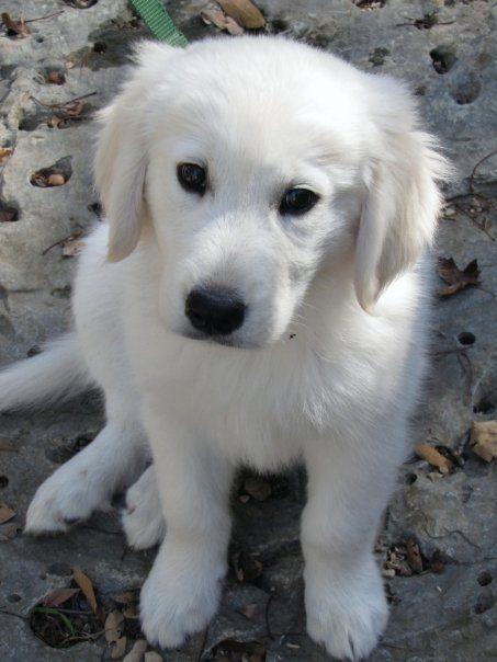 polar bear cub puppy