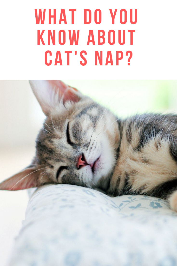 The secrets behind the cat's nap disclosed Cats, Cat