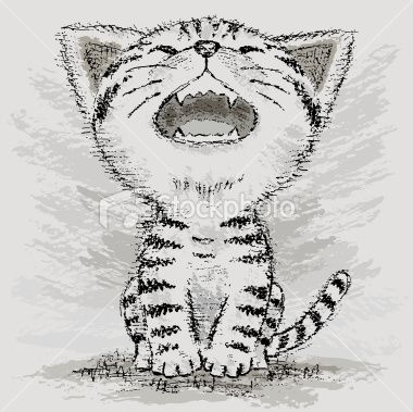 Cute American Shorthair. | Рисунки, Американская ...