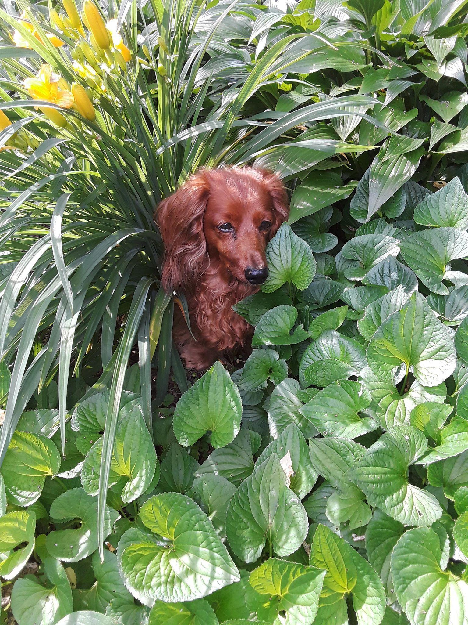 """Meet Daisy! Her furmom, Robin, says, """"Daisy has been"""