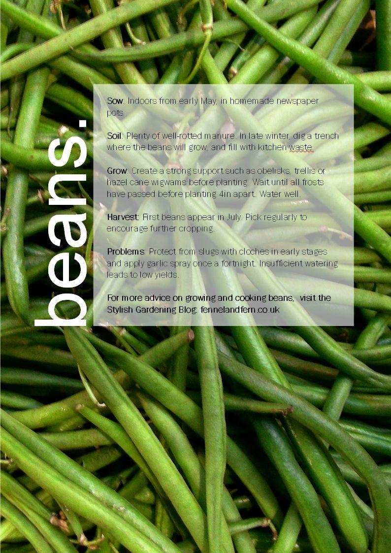 Beans Growing Guide Gardening Blog Growing Growing Vegetables