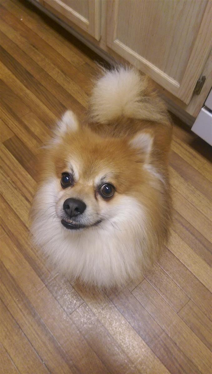 Found Dog Male Fairburn, GA, USA 30213 on March 28