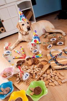 Dog Birthday Gift Puppy Gotcha Day Adoption