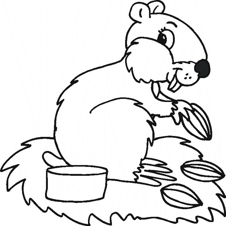 Forest Animal Coloring Pages 555x760 Picture And