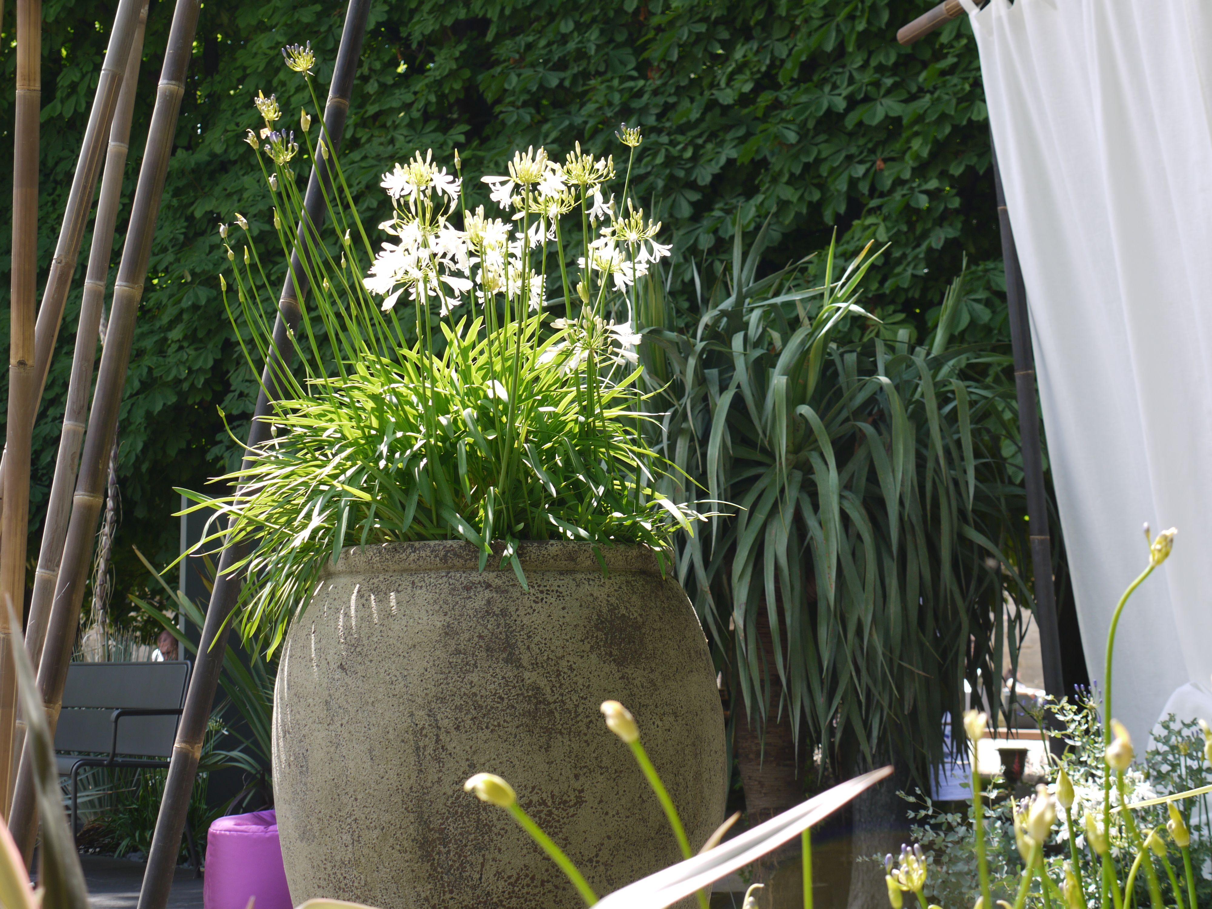 Stand Truffaut A Jardins Jardin Enorme Pot De Fleurs Et Voile Blanc Accessoire Jardin Pot De Fleurs Jardins