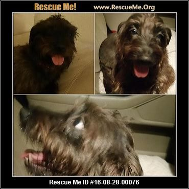 Click Here To View Dogs For Adoption Or Post One In Need Rescue Me Https Www Facebook Com Rescuemetampa Rescue Dogs Dogs Dog Adoption