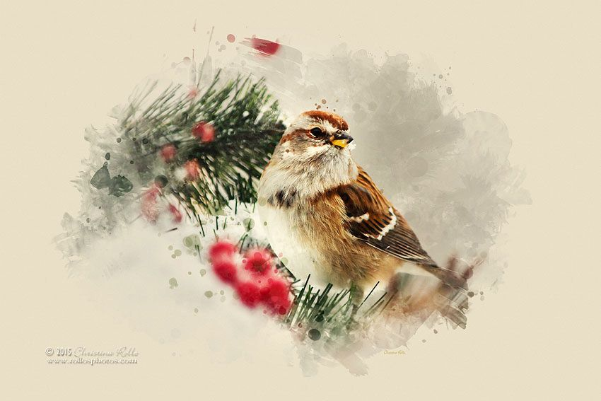 All sizes | American Tree Sparrow Watercolor Art | Flickr - Photo Sharing!