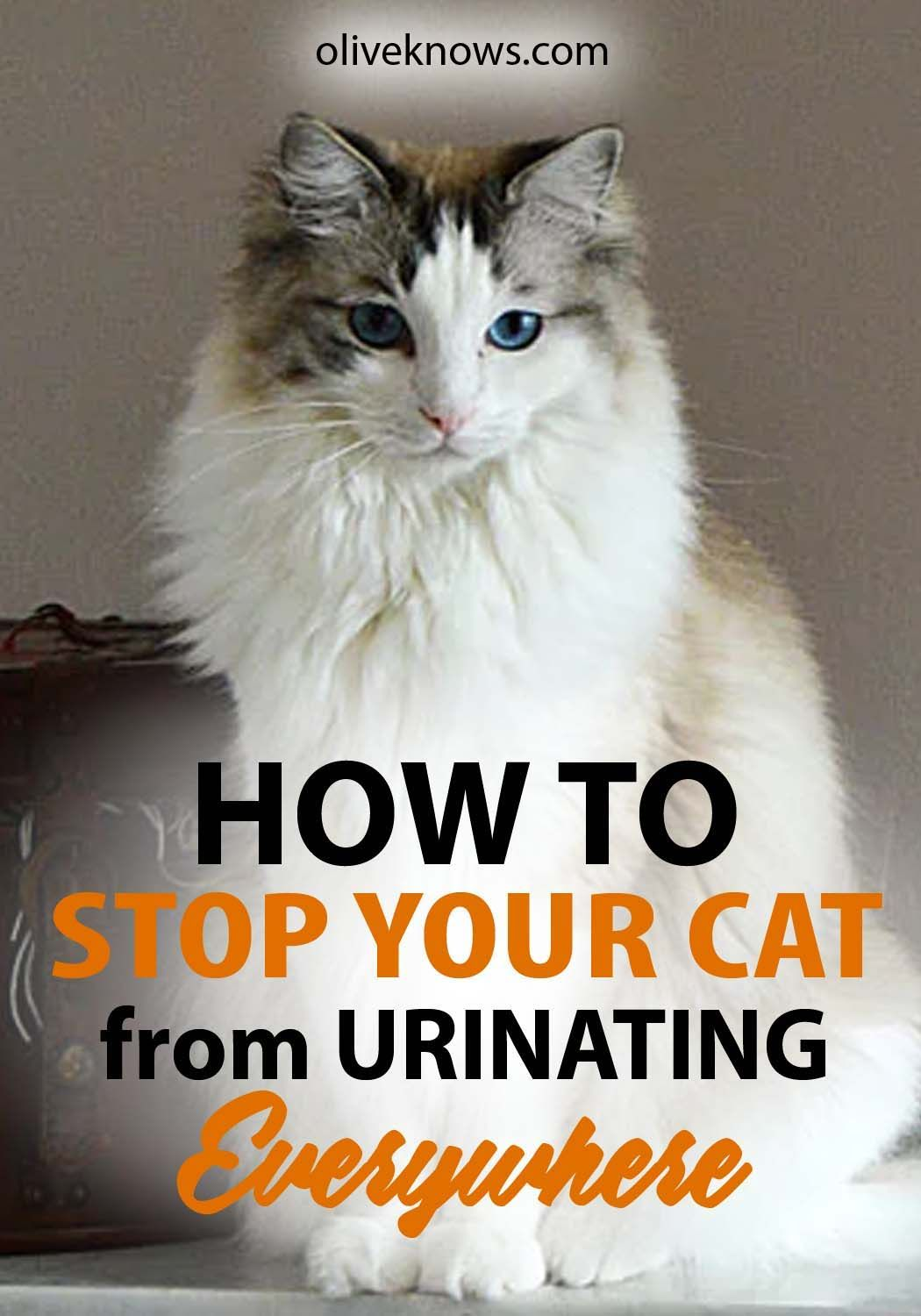 How To Stop Your Cat From Urinating Everywhere Cat Care Tips Cat Health Cats