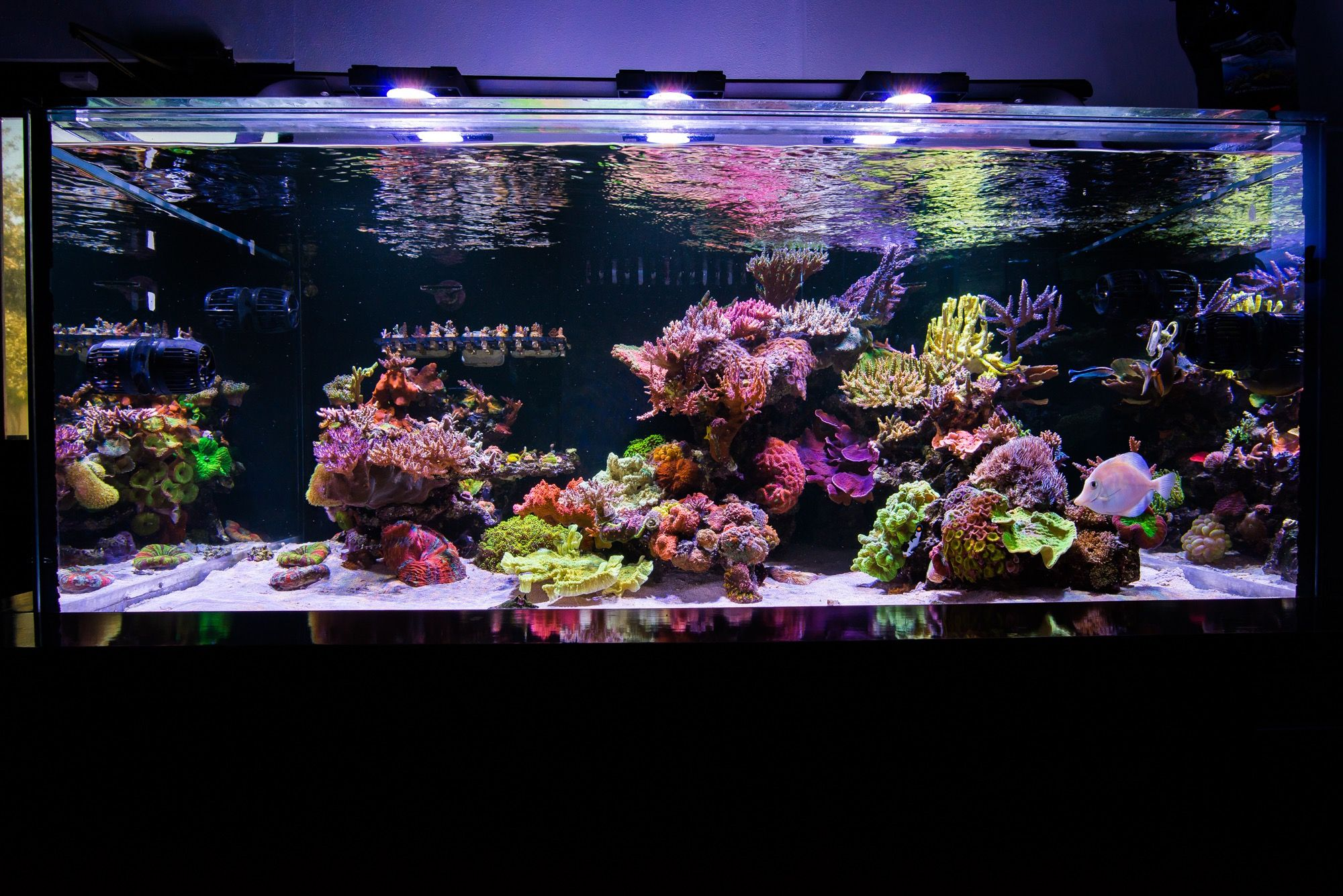 Tank Parameters Of Some Masters To This Day One Of The Most Frequently Asked Questions I Ge Saltwater Aquarium Setup Saltwater Aquarium Saltwater Fish Tanks