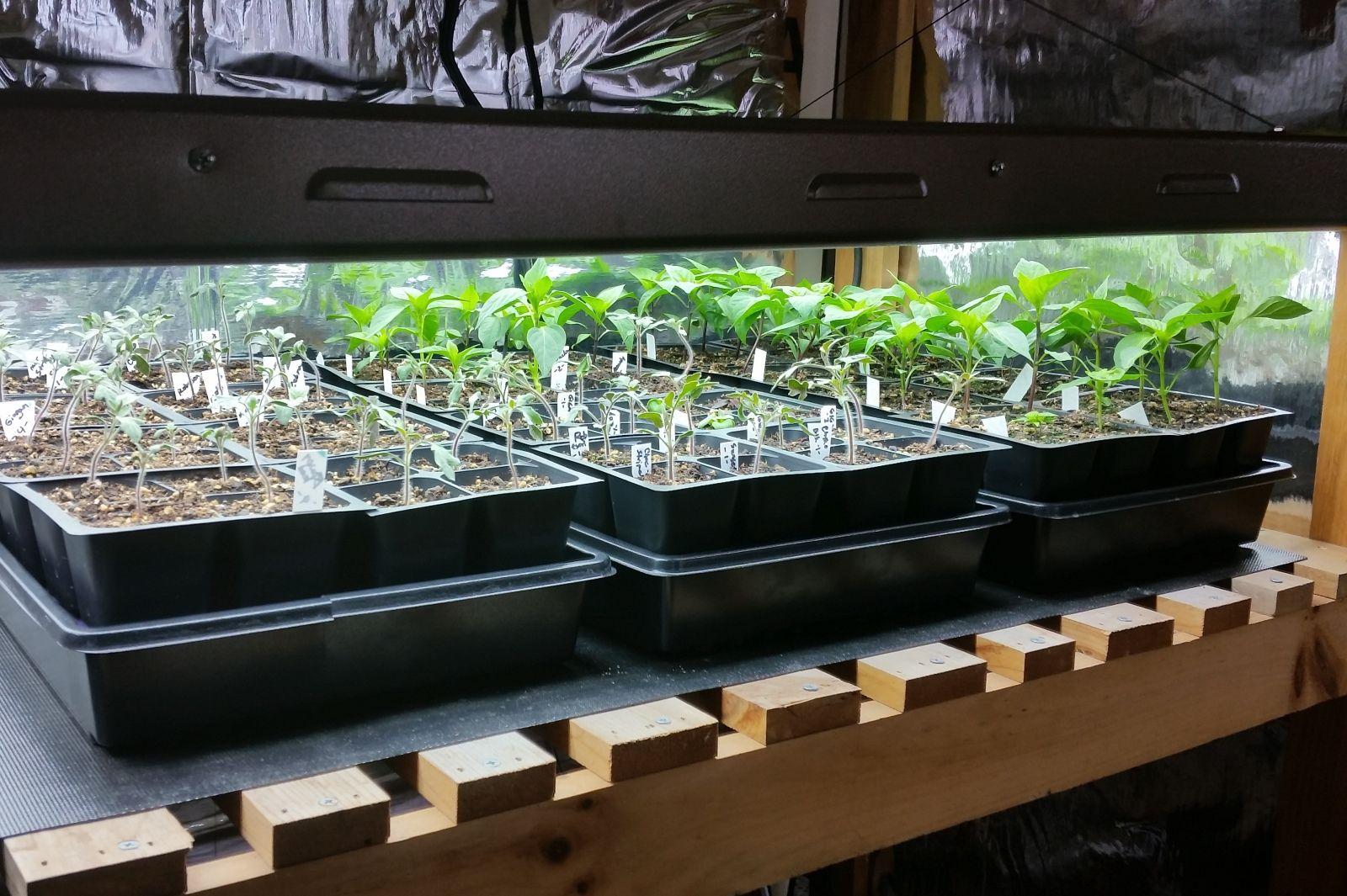Best way to start seeds indoor gardens compost tea