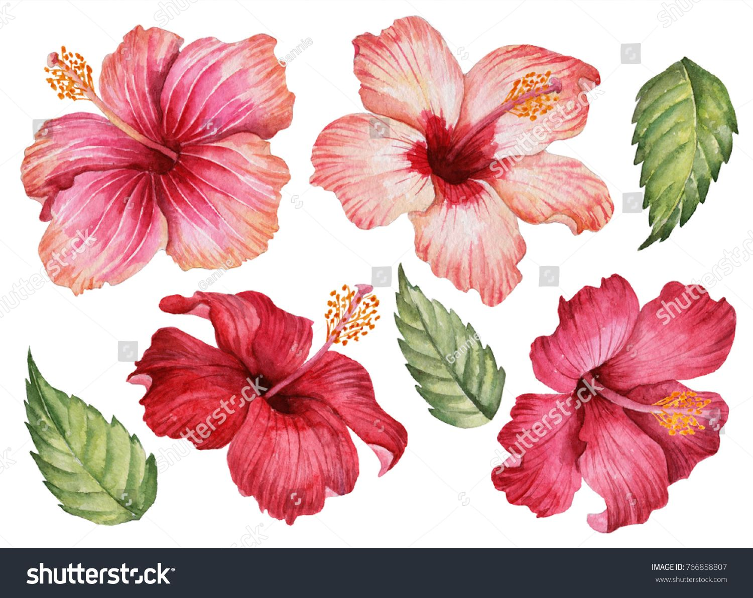 Watercolor Set Of Pink And Red Flowers Illustration Of Hibiscus And Leaves Hand Drawn Floral E Flower Illustration Watercolor Flowers Tutorial Flower Drawing