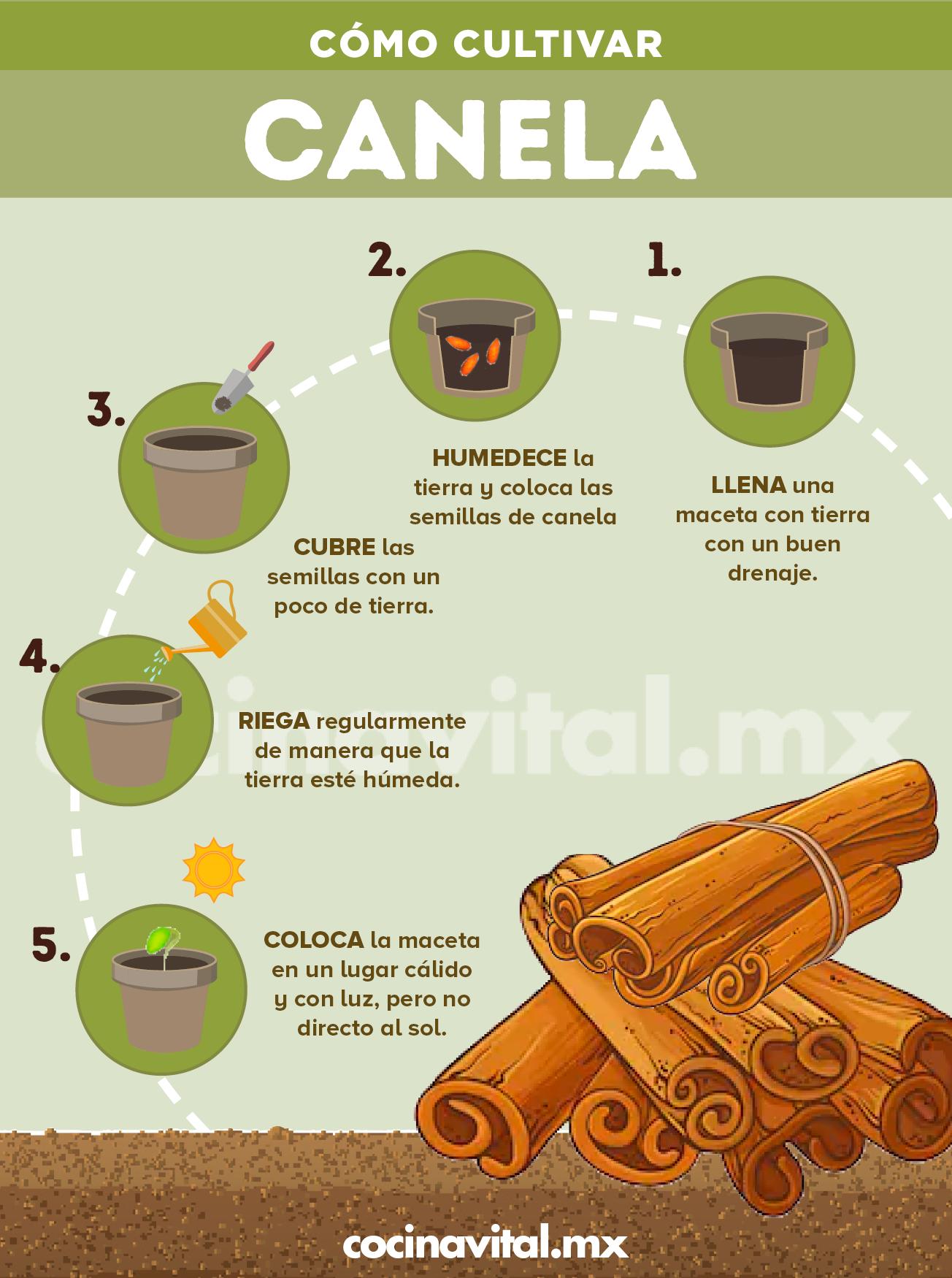 Cómo Cultivar Tu Propia Planta De Canela En Casa Cultivo De Plantas Jardinería De Hortalizas En Macetas Jardín De Productos Comestibles