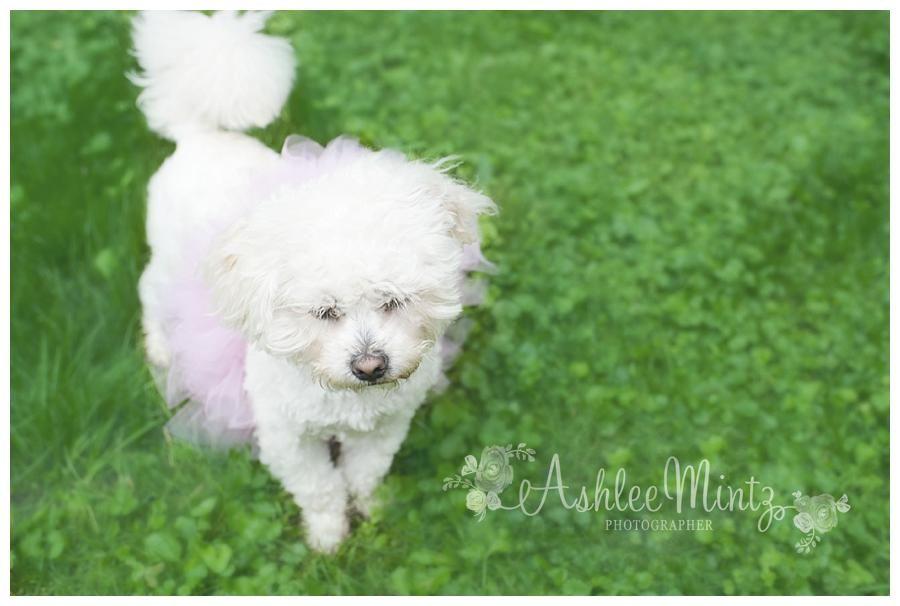 Sweet Penny girl turns ONE-Ashlee Mintz Photography