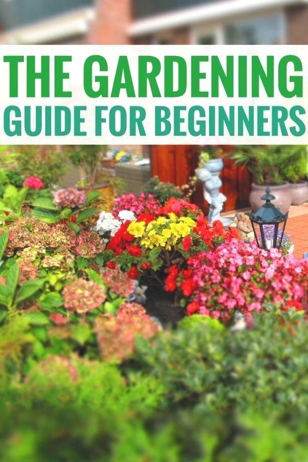 The Gardening Guide For Beginners garden ideas begginer  The Gardening Guide For Beginners garden ideas begginer begginer