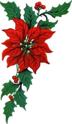 poinsettia clipart google search gift wrap ideas and extras rh pinterest com clipart poinsettia leaves poinsettia clipart images