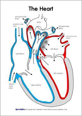 Label the heart worksheets (SB6634) - SparkleBox | Heart ...