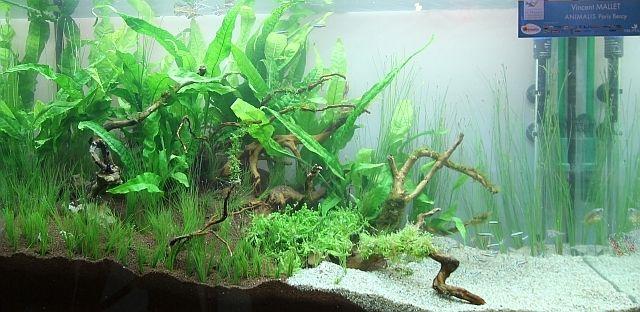 Championnat aquariophilie 2012. #aquascaping #contest #aquarium #fishtank