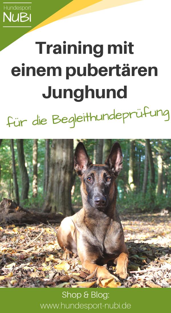Vom Welpen Zum Begleithund Teil Funf Begleithund Welpen Und Hundesport
