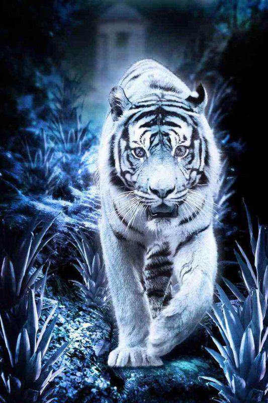 Epingle Par Cindy Johnson Sur Animals Tigre Blanc Royal Image Tigre Photos Animaux Sauvages