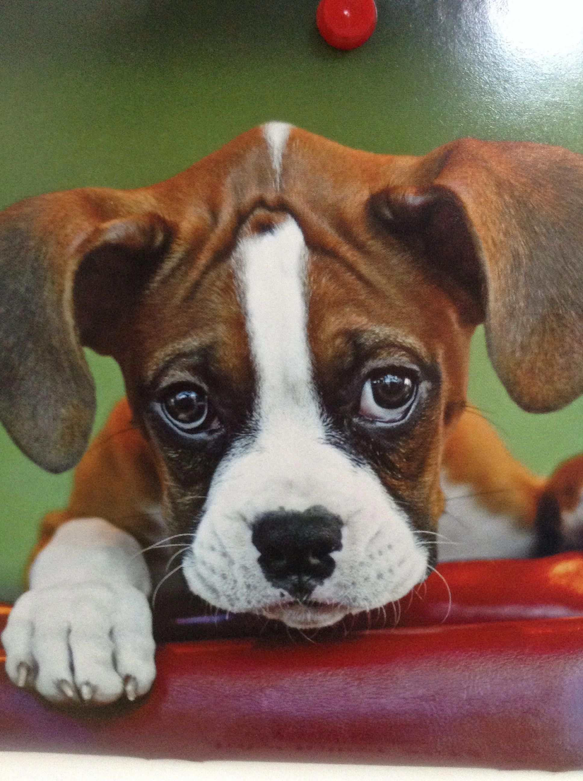 Home Boxer Dogs Boxer Puppies Cute Baby Animals
