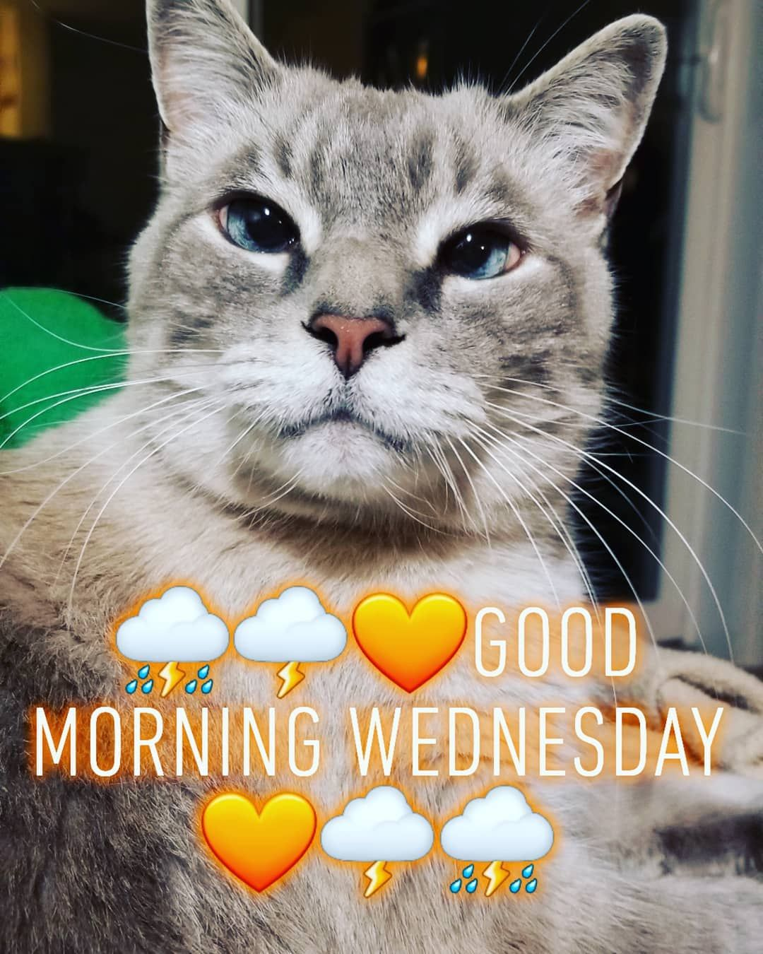 "⛈🌩🧡Good Morning Wednesday⛈🌩🧡 ""Life isn't about waiting for the storm to pass...It's about learning t..."