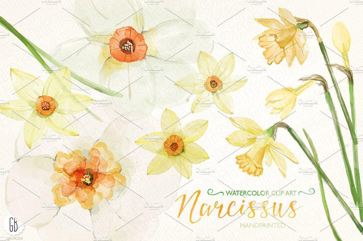 Watercolor narcissus, daffodils flowersgreenelements