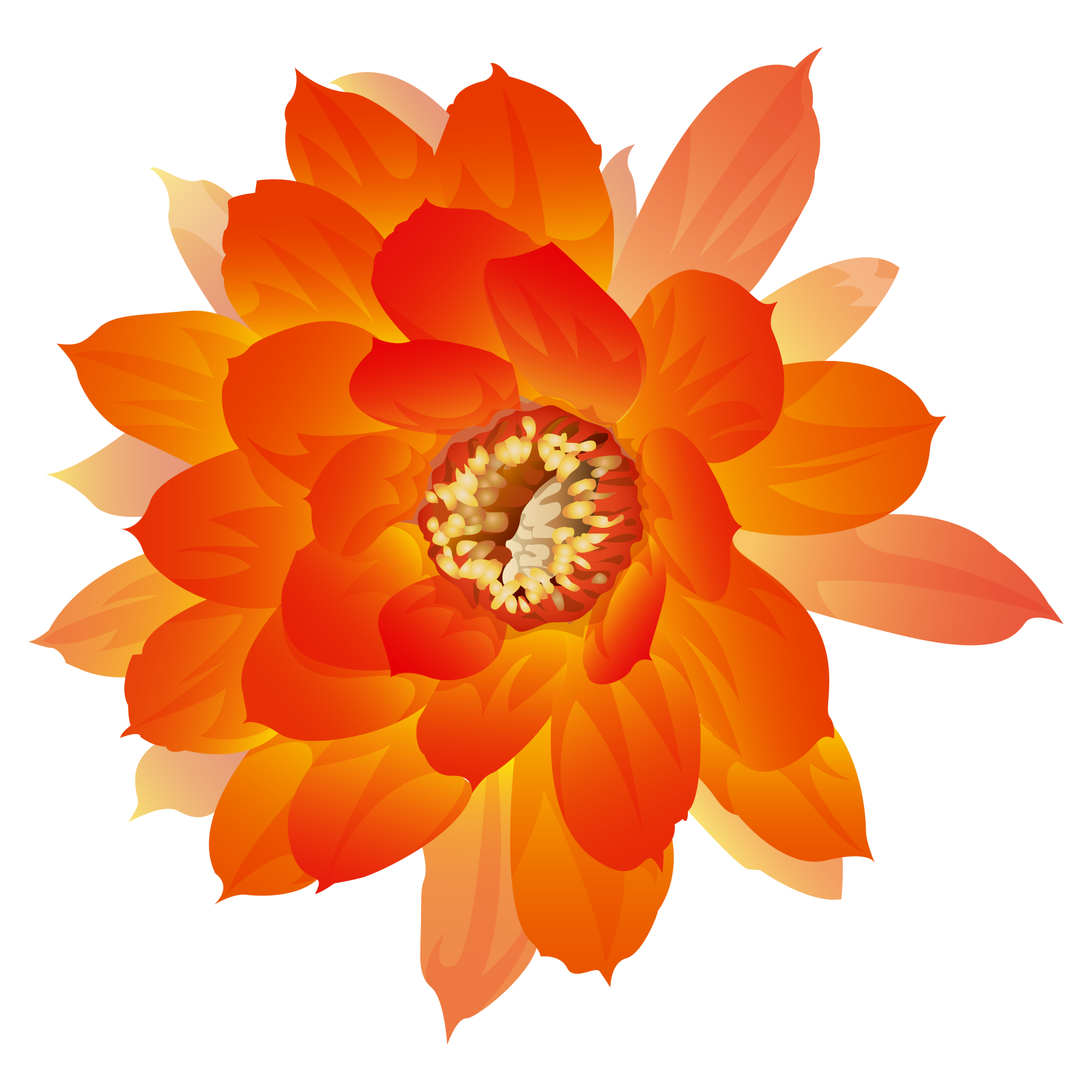 Png Orange Flowers Rose Flower Png Flower Png Images Orange Flowers