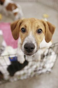 Petsmart Charities Finds Homes For More Than 400 000 Pets Every Year Petsmart Pets First Pets