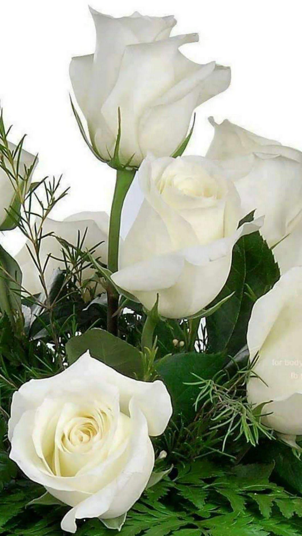 Открытка букет белых роз для любимой