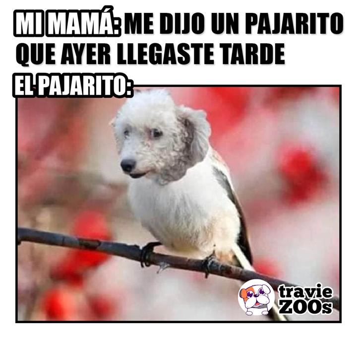 Su Perro Tambien Es Bien Chismoso Fotos De Animales Memes Divertidos Perros