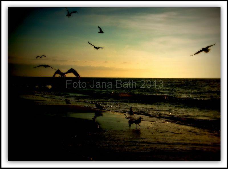 Deutschland, Germany, Graal-Müritz, Baltic Sea, Ostseeküste, beach, Strand,  flying seagulls, fliegende Möwen,photo Jana Bath 2013, www.foto-bath.de