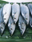 魚油の利点は腸内細菌が媒介している?