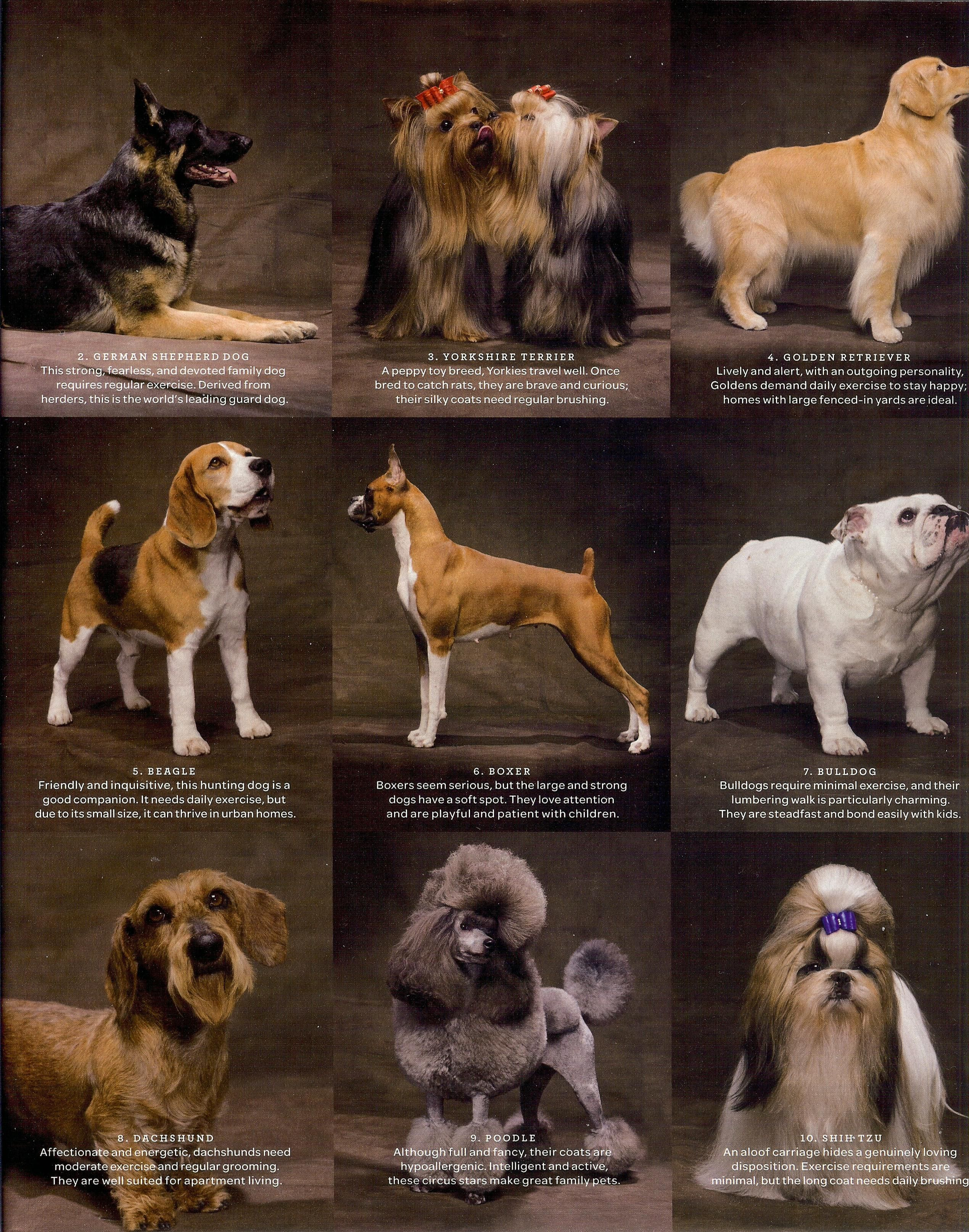 Dog Breeds Dog Breeds Chart Small Dog Breeds Chart Cute Small Dogs